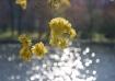 Glittering Flower