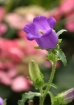 Pretty Flower 2
