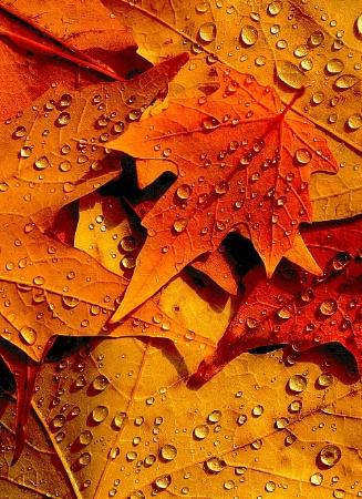 Dew Autumn