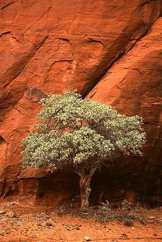 Tree by Rock Crack - ID: 370119 © Donald E. Chamberlain