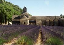 (F)-Lavender Field & Abbey - Senanque
