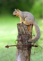 Sometimes You Feel Like A Nut