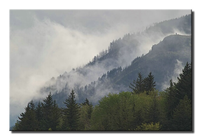 High trees, low clouds