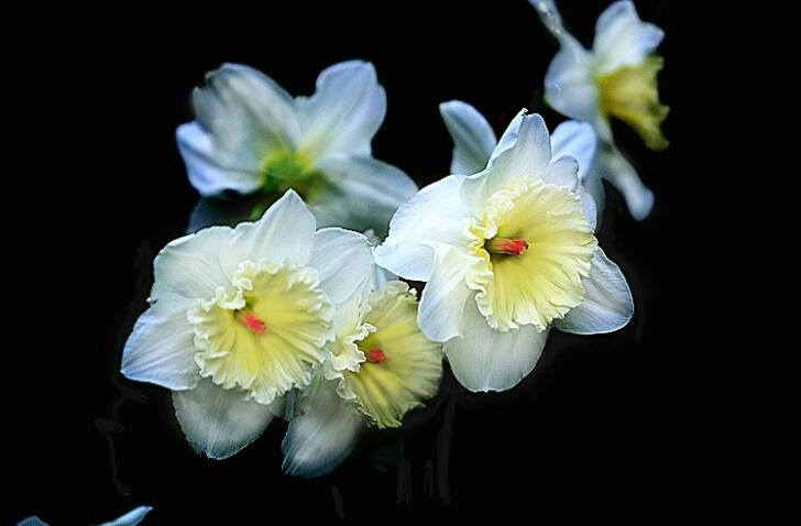 Beauty in White - ID: 374521 © Michael Wehrman