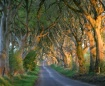 The Dark Hedges -...