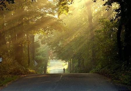 A Misty Morning  Walk