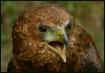 The Eagle Has spo...