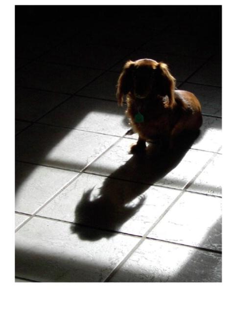 My Best Friend's Shadow