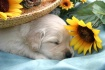 Sweet Puppy Dream...