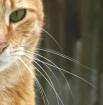 Cat's Eye Vie...