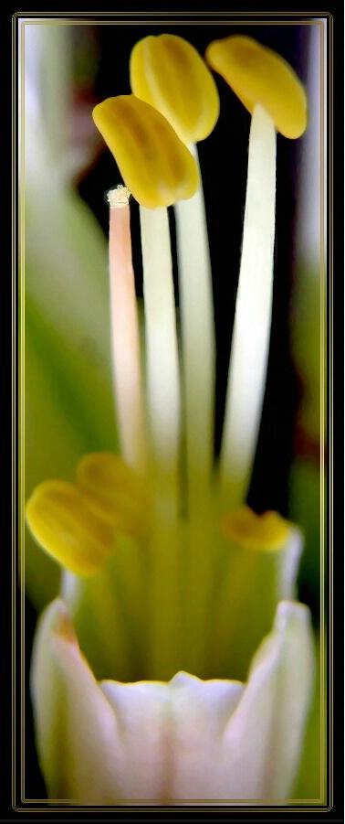 Natures Vase