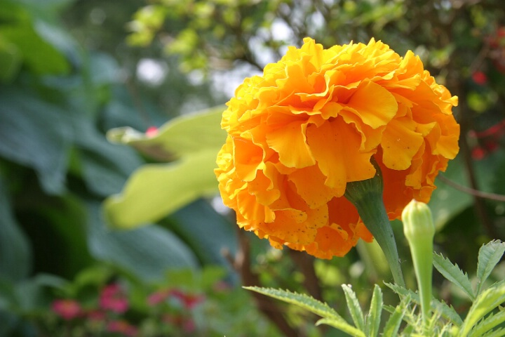 Flower - Correct Exposure