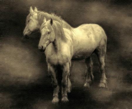 ...horses....