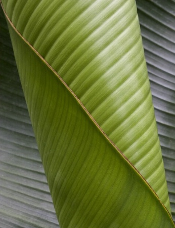 A new leaf unfolds
