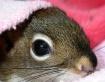 Squirrelly Peek-A...