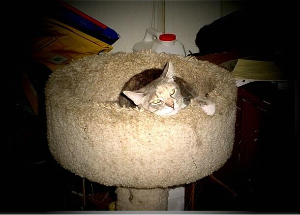 comfortable kitty