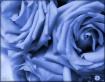 Trio in Blue