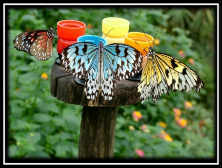How Butterflies Really Get Their Colors