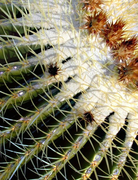 Cactus Flower - ID: 421605 © Mary-Ella Bowles
