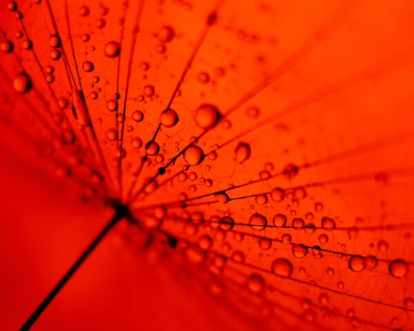 wet fairy on a red lamp