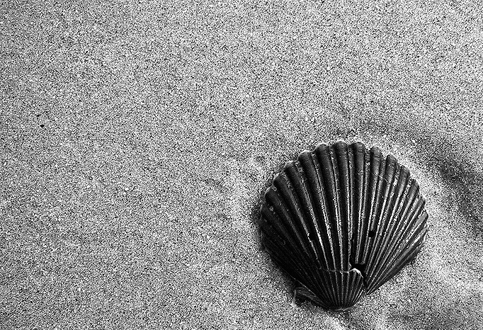 Another Beach, Another Shell