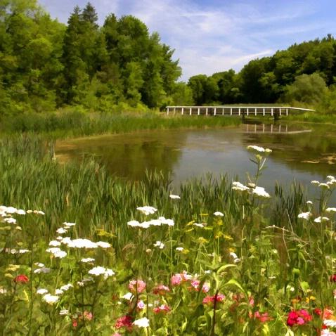 Footbridge at Five Rivers - ID: 434926 © Sandra Hardt