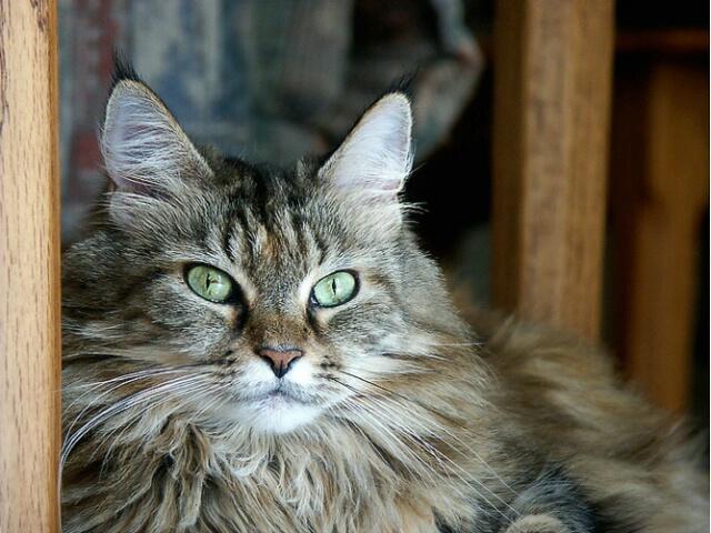 My Ali Cat