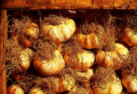 The Old Garlic Box
