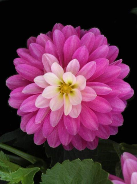 Flower Power - ID: 445982 © Sharon  Crook