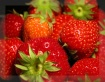 I love strawberri...