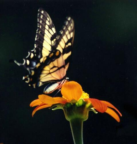 Enchantment - ID: 458296 © Virginia L. Hughes