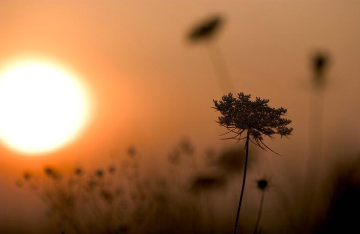 field flowers at daybreak