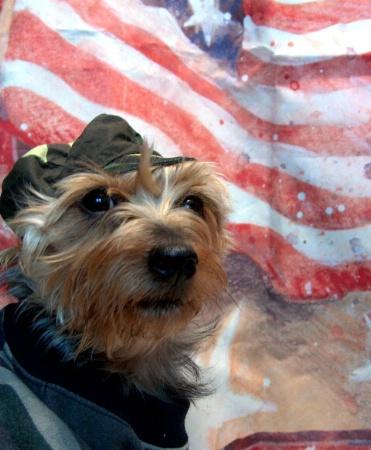 """""""American Dawg"""""""