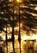 Golden Serenity