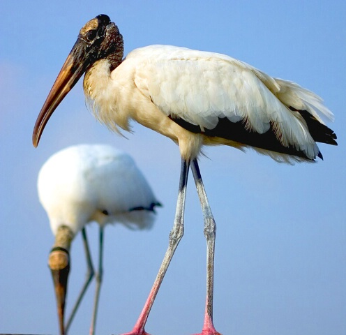 Storking (series #2)