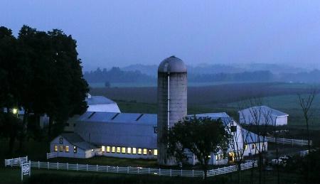 Misty Morning Milking