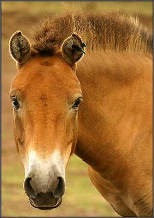 Horse with no name?