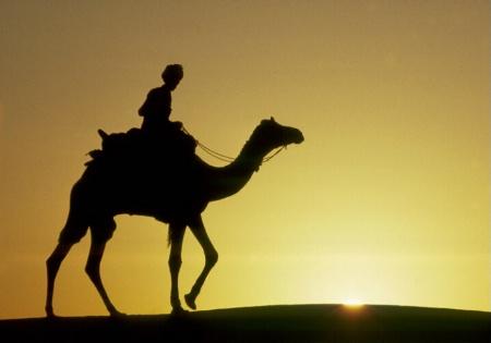 Camel at Sunset, Thar Desert, India