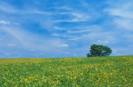 Blue Skies of Summer