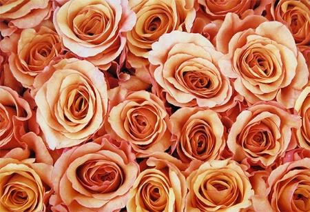 Milva - Extra Fancy bouquet