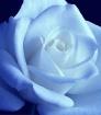 A Soft Blue Glow