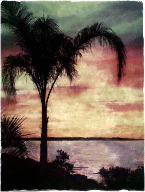 palm sunset 2