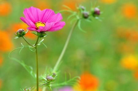 Wild Flowers #2