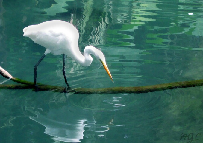 Refreshing Lagoon