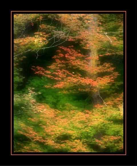 Fall, Big Creek