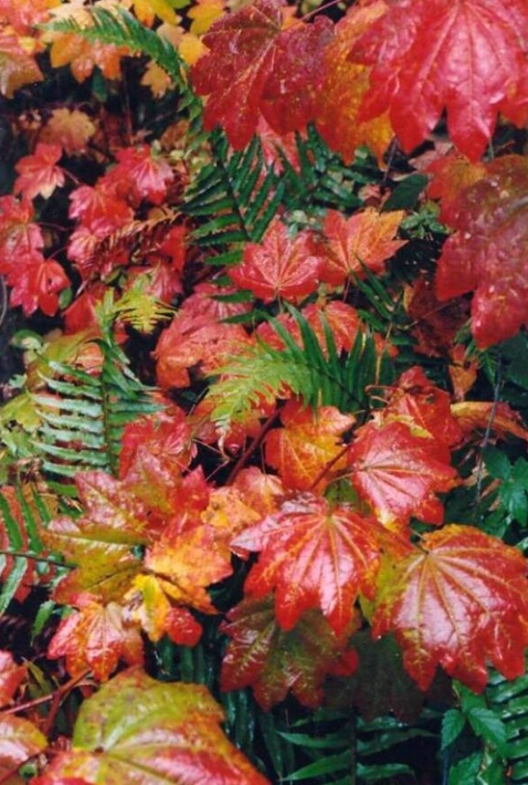 Glistening Autumn