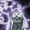 Fulgur The Owl