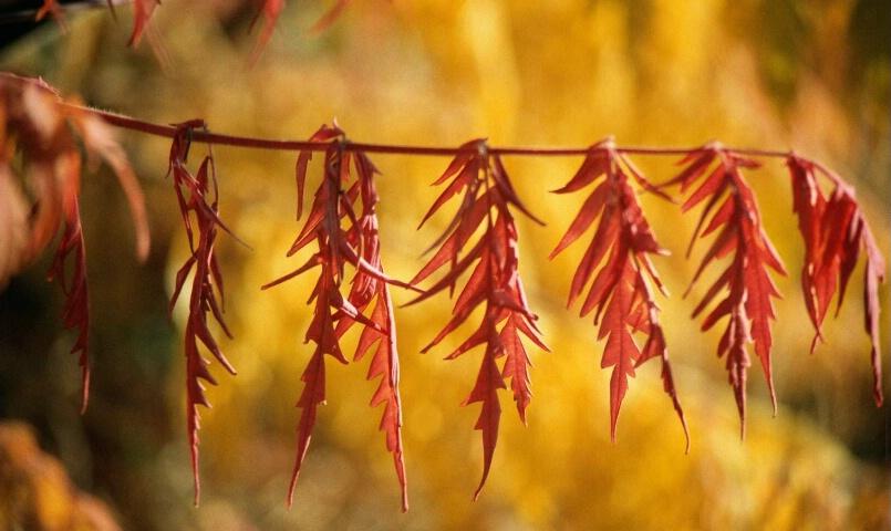 Nature's Clothesline