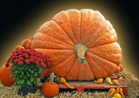 Pumpkin Magnificence