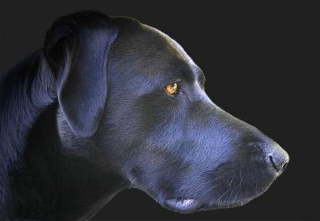My Dog......Sadie